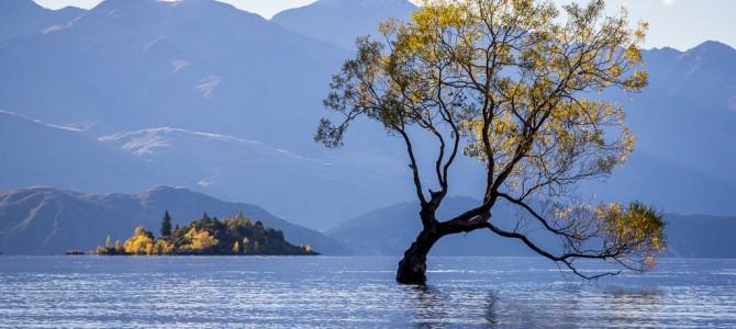 Wanaka Lake et le fameux arbre qui pousse dans l'eau