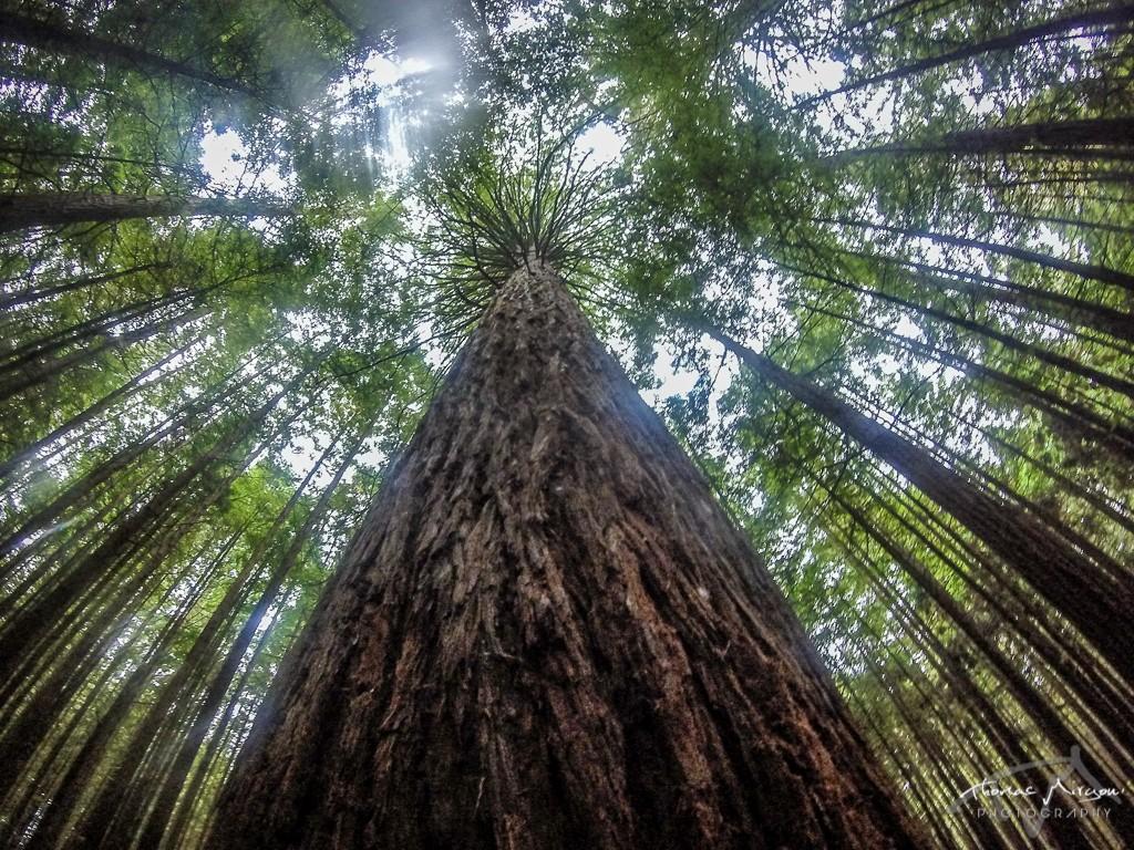 Redwood Rotorua