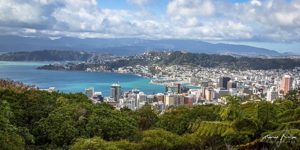 Lookout Wellington